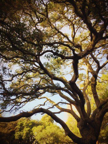 Taille et soins des arbres